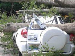 Optimized Beaver-Tree-Emergency-Tree-Removal-Services-1_98ae067e3fb665f58a6777020ac65490