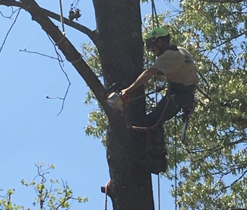 Get back in your home faster tree service