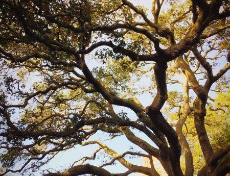 Tree Service 3